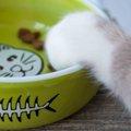 猫のフードボウルの選び方とおすすめ3選!