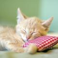 猫を室内飼いするメリットと注意点