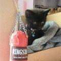 子猫は私のスニーカーにしがみついた…クローバー畑で発見した「メイ」