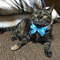 猫好きさんが思わずツッコミを入れたくなる猫に関する諺(ことわざ)5選