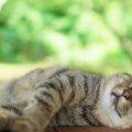 猫が喉を鳴らすのはナゼ?不思議が多いゴロゴロ音について。