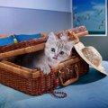 猫をペットホテルに預ける時の準備と注意点