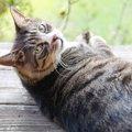 猫がお返事している8つの仕草
