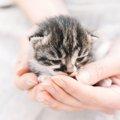 猫を飼うには何が必要か 費用や心構えと注意点