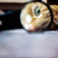 猫の白目が見えない理由と白目の役割