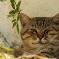 猫がウインクする時の気持ちと病気について