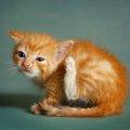 猫にダニがいる時の症状、原因、駆除の方法