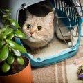 猫のお留守番にはケージを使うべき?使い方や注意点、おすすめ商品に…