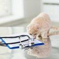 猫が水を飲まない!そのときの原因と対処法