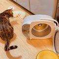 【大惨事】炊飯器をひっくり返した猫への制裁が『愛』に溢れすぎてい…
