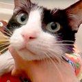 【こんな猫初めて見た!】お風呂に何の抵抗も示さない猫