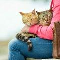 西小山の猫カフェ「カールアップカフェ」の可愛いすぎる猫と店舗情報