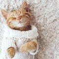 猫につけたい和風な名前まとめ!つけ方のポイントとおすすめ一覧