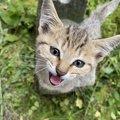 猫に話しかけることのメリット3つ