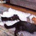 ふわふわサクサクで楽しそう♪紙を使って猫が喜ぶ簡単おもちゃをDIY