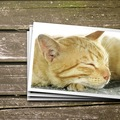 干支に猫が選ばれなかった理由は、ねずみのせい!?