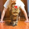 猫が筋トレを邪魔してくる6つの心理