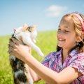 小さい子供がいると猫の里親になれない?その理由と解決法とは