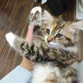 【癒し】思わず脱力する猫の行動5つ