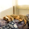 猫がお気に入りの場所を作る3つの理由