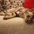 猫がぐったりしている時に考えられる病気や対策