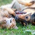 猫と犬の同居を仲良く暮らすためのポイント