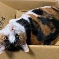 猫は『幽霊』が見える?人間には無い猫の優れた感覚3つ