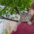猫は抱っこが好き?嫌い?サインを理解してもっと仲良くなろう!