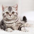 猫のポーズには意味がある!体の動きから読み取る気持ちの変化