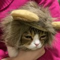 コスプレでテンションが下がってしまった猫さん!