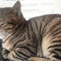 猫による進捗管理も!テレワークのお悩みがニャンとも羨ましいと話題