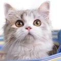 猫のキャリーバッグ おすすめ商品・選び方