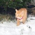 家族が行く所、どこでもついて行く猫がインスタで話題に!