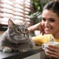 やってはいけない!猫と過ごすときの『NG行動』5つ