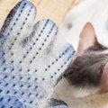 猫の換毛期によくある困った現象と対策4つ