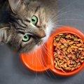 猫のごはんの与え方 子猫~シニア期の量や回数・時間