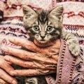 猫の『寿命』は延ばせる?健康長寿のために実践すべき5つのこと