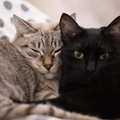 飼い主が猫同士の仲を取り持つ為に出来る3つの事