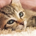 鳴き声で分かる子猫の気持ち