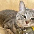猫が『人生で一番嬉しい』と思うこと3つ