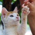 猫にエビをあげても大丈夫?