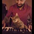 「だんだん眠くなってくるニャZzz」ピアノを聴くと眠くなる猫さん