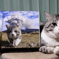 旅猫ニャン吉とは?これまでの経緯と活躍