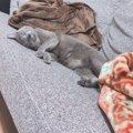 癒ししかない!かわいい猫のお昼寝写真17連発