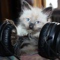 猫が反応する音6つ!特徴や活用法