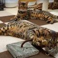 それぞれ違う遊び方!猫さんたちとネズミのおもちゃ♪