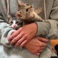 死去した母猫にすがる4匹の子猫を保護…活動にかける思いとは?