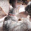 ふかふかもふもふ気持ちいい〜!猫さんたちの日光浴♡