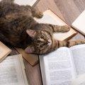 猫関連の英語、どれだけ知ってる?自慢できちゃう猫英語特集!!