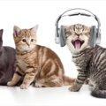 猫の鳴き声がうるさい原因とその対処法